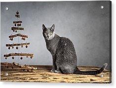 Cat Christmas Acrylic Print by Nailia Schwarz