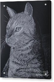 Cat Acrylic Print by Cybele Chaves