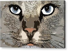 Acrylic Print featuring the photograph Cat by Cynthia Powell