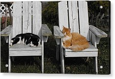 Cat Days Of Summer Acrylic Print