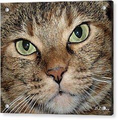 Cat Acrylic Print by Dennis Stein