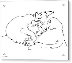 Cat Drawings 2 Acrylic Print