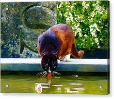 Cat Drinking In Picturesque Garden Acrylic Print by Menega Sabidussi