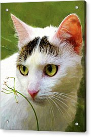 Cat Enjoying The Garden Acrylic Print by Menega Sabidussi