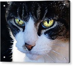Acrylic Print featuring the digital art Cat Eyes by Jana Russon
