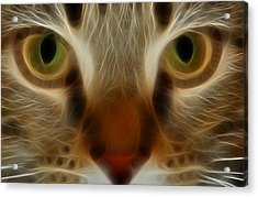 Cat Eyes Acrylic Print by Kathleen Stephens