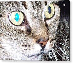 Cat Eyes Acrylic Print by Martha Hoskins