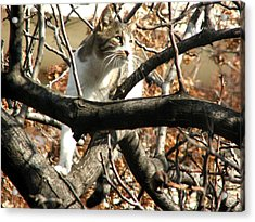 Cat Hunting Bird Acrylic Print
