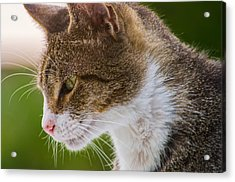 Cat Hunting Acrylic Print