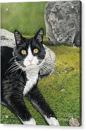 Cat In A Rock Garden Acrylic Print by Sarah Batalka