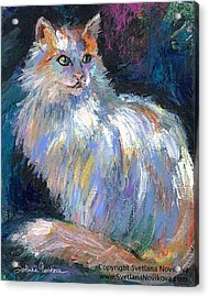 Cat In A Sun Painting By Svetlana Acrylic Print