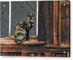 Cat In A Window Acrylic Print
