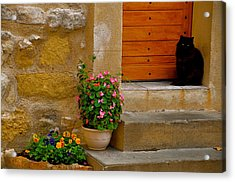 Cat In Capestang France Acrylic Print by K C Lynch