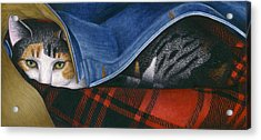Cat In Denim Jacket Acrylic Print