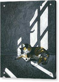 Cat In Empty Room Acrylic Print by Carol Wilson