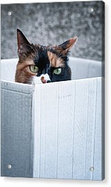 Acrylic Print featuring the photograph Cat In The Box by Laura Melis