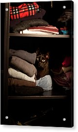 Acrylic Print featuring the photograph Cat In The Closet by Laura Melis