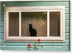 Cat In The Window Acrylic Print by Robert Frederick