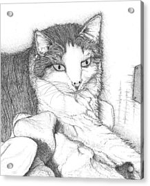 Acrylic Print featuring the drawing Domestic Cat by Jason Girard