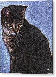 Cat Acrylic Print by Johann Todesengel