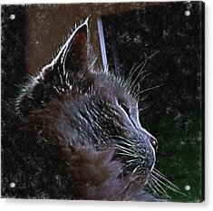 Cat Muse Acrylic Print by Aliceann Carlton
