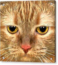 Cat Musya Acrylic Print by Sergey Lukashin