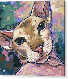 Cat Acrylic Print by Nadi Spencer