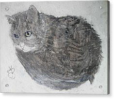Acrylic Print featuring the mixed media Cat Named Shrimp by AJ Brown