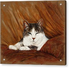 Cat Nap Acrylic Print by Billie Colson