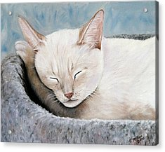 Cat Nap Acrylic Print by Merle Blair