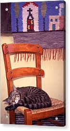 Cat Nap Acrylic Print by Steve Outram