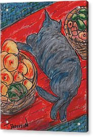 Cat Nap Acrylic Print by Todd  Peterson