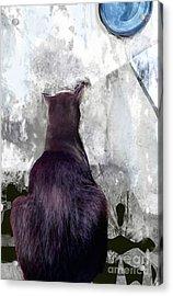 Cat's Blue Moon Acrylic Print