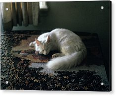 Cat On A Puzzle Acrylic Print