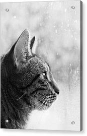 Waiting... Acrylic Print by Helga Novelli