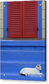 Cat On Blue Steps Acrylic Print