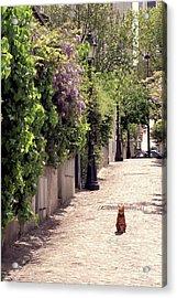 Cat On Cobblestone Acrylic Print