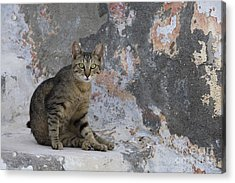 Cat On Stairs, Greece Acrylic Print by Jean-Louis Klein & Marie-Luce Hubert