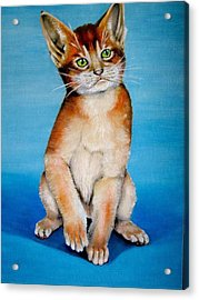 Cat Original Oil Painting Acrylic Print by Natalja Picugina