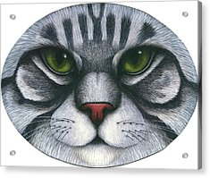 Cat Oval Face Acrylic Print by Carol Wilson