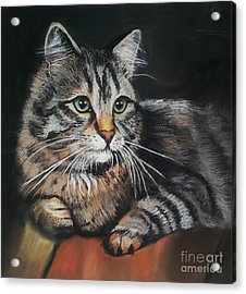Cat Pastel Drawing Acrylic Print by Maja Sokolowska