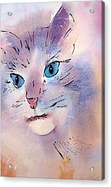 Cat Acrylic Print by Pat Vickers