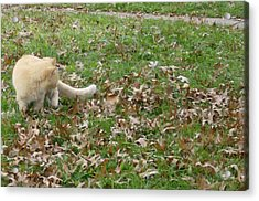 Cat Playing In The Leaves Acrylic Print
