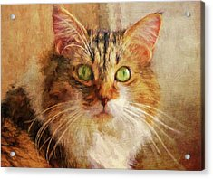 Cat Portrait - Pretty Girl Acrylic Print