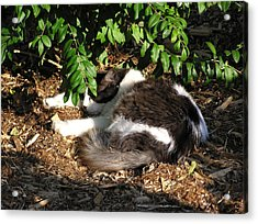 Cat Resting Under Tree Acrylic Print by Richard Mitchell