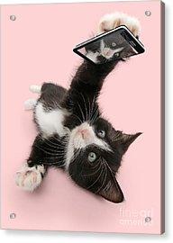 Cat Selfie Acrylic Print