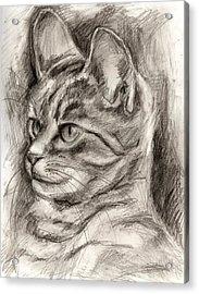 Cat Study Drawing No Three Acrylic Print