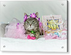 Cat Tea Party Acrylic Print