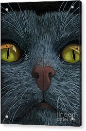 Cat Vision - Black Cat Oil Painting Acrylic Print by Linda Apple