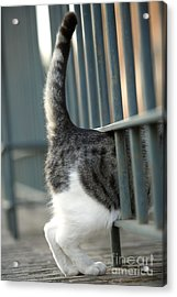 Cat Walking Through Fence Acrylic Print by Jean-Michel Labat